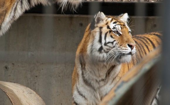 Folsom Animal Sanctuary