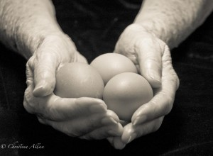 my mother's hands, Mother's holding egg hands with Parkinson's Disease