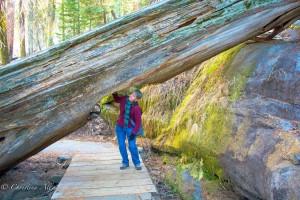 Chris Allan Sacramento Photographer Sequoia National Park