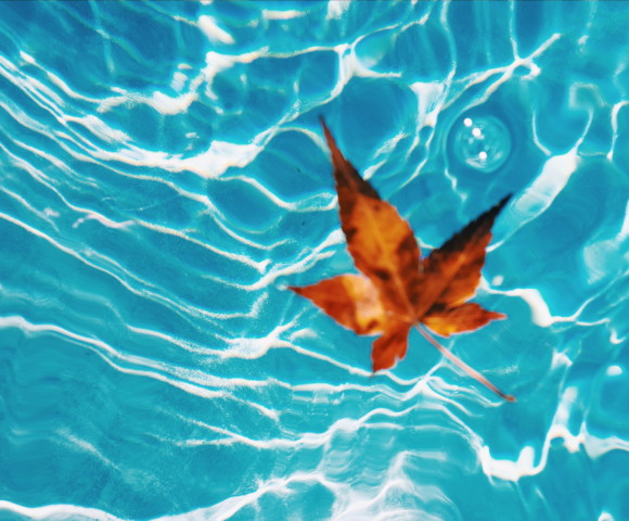 other Fall leaf in pool sacramento allan