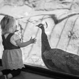 Child and Peacock