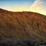 Desert Hikers