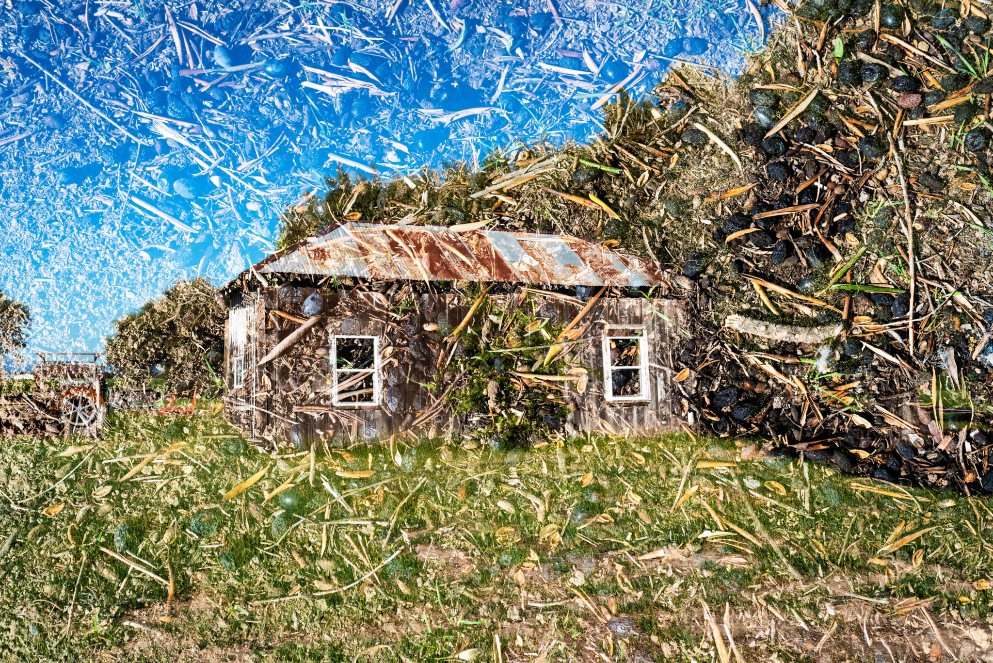 outbuilding, rusty roof, olives, multiple exposure, farm, yolo county, central valley, woodland, california, agriculture, historic