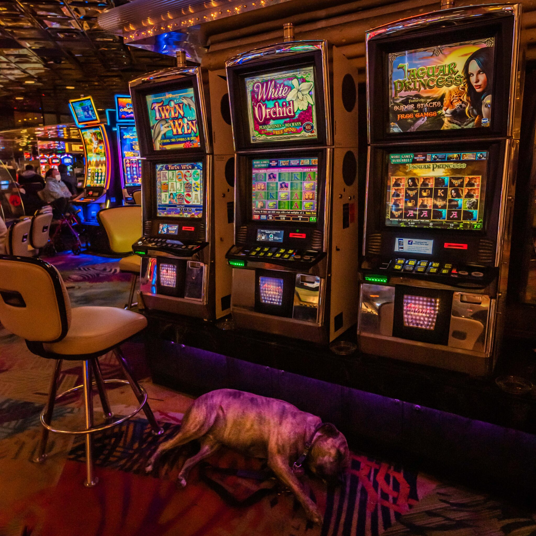 reno in transition, dog, sleeping, funny, casino, floor, humorous, slot machines, chris allan, covid transition time for Reno
