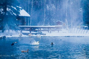 Ducks in Pond at Chena Springs Resort