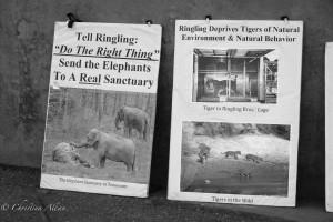 Signs2-Ringling-brothers-circus-protest-arco-arena-sacramento-allan-DSC 5959
