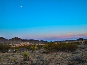Joshua Tree National Park with Moon