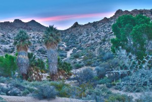 Joshua Tree National Park Sunrise 2
