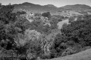 Napa Hillside