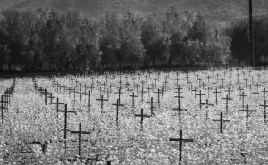Napa Vineyard Crosses