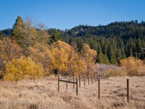Fall Trees in Bear Valley