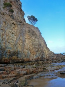 Abalone Cove Bluff with Tree