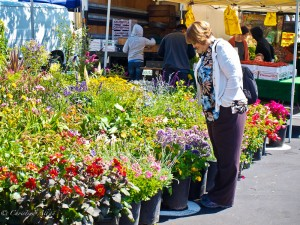 Flower Stand at the Farmer's Market