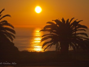 Palos Verdes Sunset with Palm