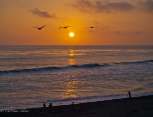 Pelicans at Carlsbad Beach During Sunset