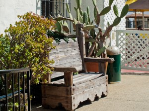 Mission Bench with Cactus in Carlsbad