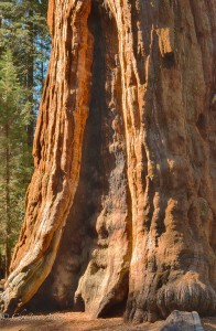 Fire Scar on General Sherman Tree