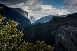 Half Dome View Yosemite