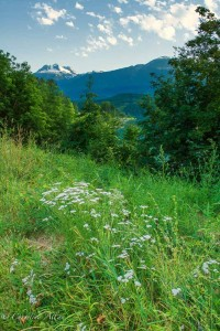 Wildflowers, Columbia River and Mount Revelstoke