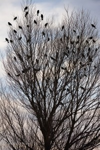 Tree with- Birds