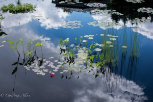 Clouds, reeds, water lilies, reflections