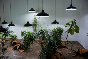Plant Light Exhibit