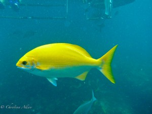 Eleele Fish