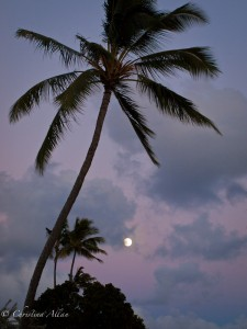Full Moon with Palm Tree
