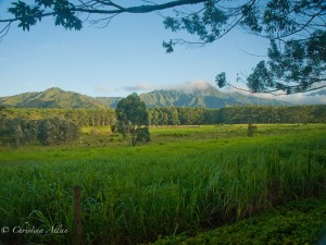 Inland View from South Kauai