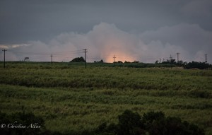 Cane Fire Burn