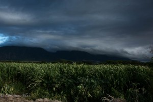Clouds and Cane Fields