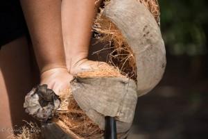 Dehusking a Coconut