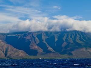 Molokai Seacliffs