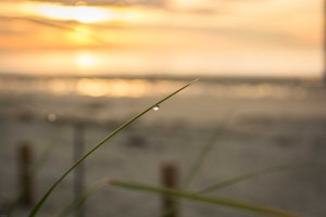 Dew dripping Sunrise Ogunquit Beach