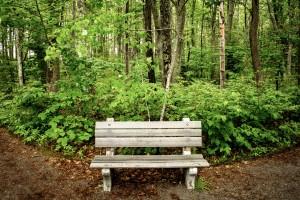 Ferns Rachel Carson bench national wildlife reserve