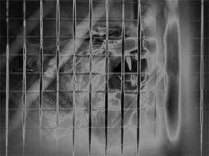 Solarization: Lion in Cage