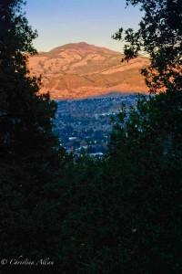 Mount Diablo Tree View