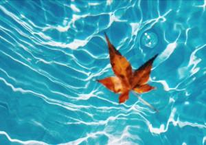 Fall leaf in pool