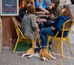 Cafe with Dog in Paris