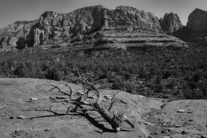 Branch and Sedona Vista
