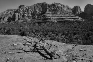 Branch and Sedona Vista