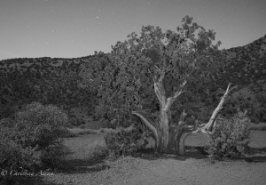 Desert Tree at Night