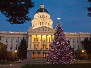 Annual Capitol Christmas Tree