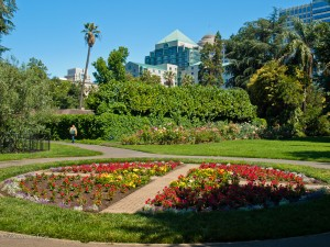 Garden with Sacramento Skyline