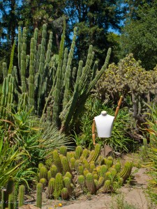 Succulent/Cactus Garden