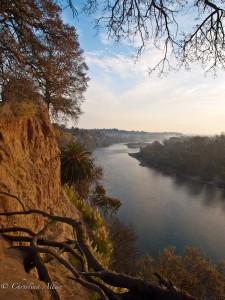 American River View at Dawn