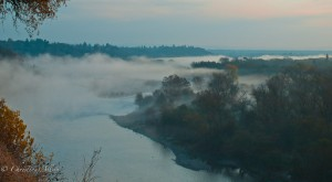 Foggy Morning on the American River