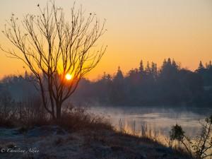 Sunrise with Fog Near CSUS