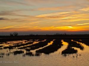 Rice Field Patterns, Yolo Bypass