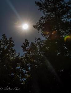 Eclipse 2017 with lens flare Sacramento Allan